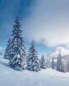 Fabulous winter landscape with covered snow trees. Magic wintry scene. Carpathian, Ukraine, Europe.  poster