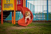 stock photo of collie  - Border Collie dog riding from the hill on the playground - JPG