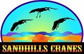 Sandhills Krane