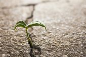 stock photo of environmental conservation  - weed growing through crack in concrete pavement - JPG