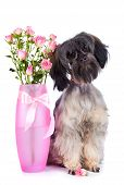 Decorative Doggie And Roses In A Vase.