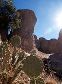 Cactus And Rocks