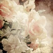 art floral vintage sepia background with white roses