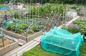 Allotment vegetable garden