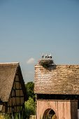 image of stork  - nest of stork on house roof - JPG