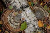 Autumn - polypore..