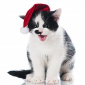 adorable kitten in a santa hat