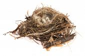 Detail Of Bird Eggs In Nest