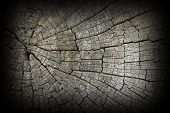 foto of century plant  - cracks on old oak wood surface detail of cut trunk used as beam for several centuries - JPG