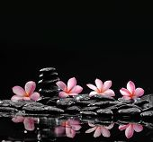 ,Frangipani with zen stone for Spa concept