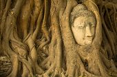 pic of buddha  - Head of Buddha in Ayutthaya - JPG