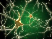 stock photo of neuron  - Neurons network in human brain - JPG