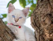 Child Cat Blue Eye On Tree