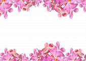 Orchid flowers border with white copy space