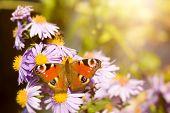 An image of a nice butterfly Aglais io