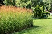 picture of manicured lawn  - A finely manicured lawn in a beautiful garden - JPG