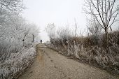 Road in the winter with a pedestrian
