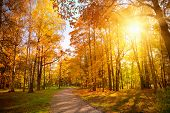 picture of october  - Autumn forest in october with beautiful colored trees - JPG