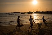 stock photo of jetties  - silhouettes of people walking their dogs on the beach at sunset - JPG