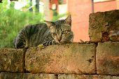 Alone cat