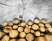 Wooden Logs On Wooden Background