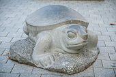 pic of the hare tortoise  - Daugavpils Latvia  - JPG