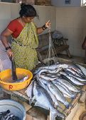 Woman Weighs And Sells Large Fish On The Market.