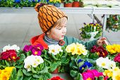 picture of flower shop  - Cute little boy choosing flowers in flower shop - JPG