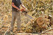 Oak Saw