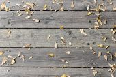 stock photo of suicide  - falled dry leaf of suicide tree on wooden deck - JPG