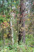 Forest Rowan.