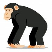 picture of chimp  - Vector Cartoon Chimp Isolated On Blank Background - JPG