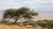 Langano Lake, Ethiopia, Africa