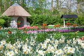Spring Flowers in Tulips Garden Keukenhof Lisse
