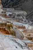 image of mammoth  - Hot water cascading over the colorful mineral and bacteria formations of Mammoth Hot Springs in Yellowstone National Park - JPG