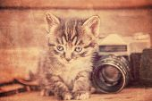 Cute kitten with photo camera