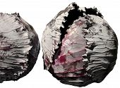 Isolated Red Cabbage