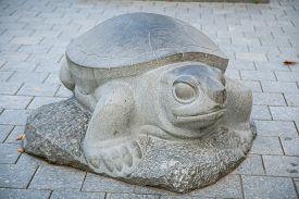 foto of the hare tortoise  - Daugavpils Latvia  - JPG