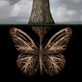 stock photo of foundation  - Creative roots concept as a tree with a root shaped as a butterfly as a powerful environmental metaphor or symbol for inner thoughts and strong creativity foundation - JPG