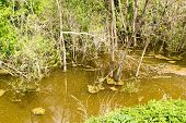 picture of swamps  - Wild swamp water and murky green brown water