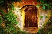 pic of wine cellar  - old entrance door in forest - JPG