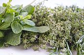 picture of bundle  - Herbal bundle made of mint thyme and tarragon  - JPG