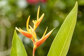 stock photo of bird paradise  - The plant in this picture is the bird of Paradise - JPG
