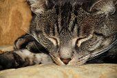 Cat Nap Close-Up