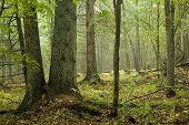 Natural Mixed Forest After Rain