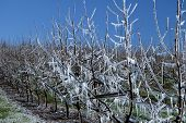 Frost Protection 3