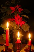 Noche Buena planta 2