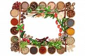 Spice and herb border with fresh and dried herbs and spices and cinnamon sticks forming a frame on w poster
