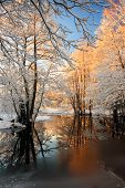stock photo of fairy-tale  - River landscape with hoarfrost trees and sunlight - JPG