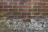 Abstract Textured Brick Wall With White Mould